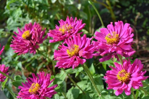 flower-110692_960_720